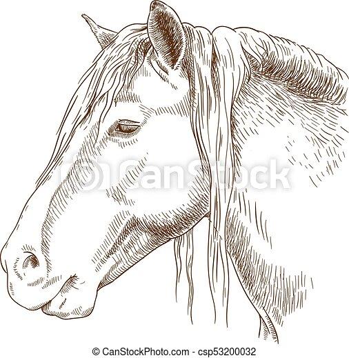 ábra, metszés, fej, ló - csp53200032