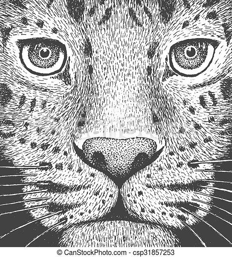 ábra, metszés, leopárd - csp31857253