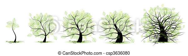 élet, öreg, tree:, életkor, fiatalság, felnőttkor, gyermekkor, előad, kamaszkor - csp3636080