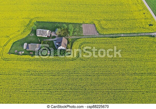 épület, tanya, rapeseed, út, kilátás, litvánia, megfog, antenna - csp88225670