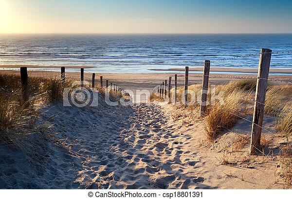 észak, arany, napfény, tenger, út, tengerpart - csp18801391