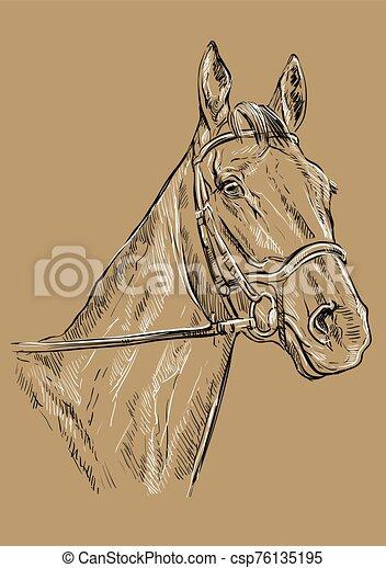 21, barna ló, portré - csp76135195