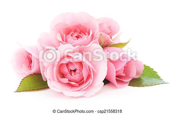 agancsrózsák, rózsaszínű - csp21558318