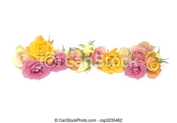 agancsrózsák, rózsaszínű, sárga - csp3235462