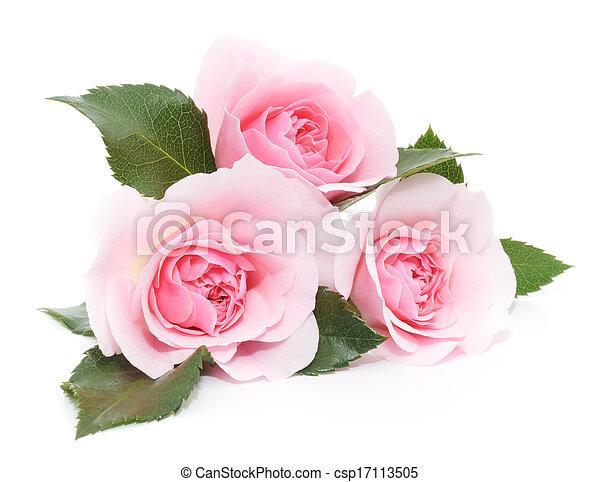 agancsrózsák, rózsaszínű - csp17113505