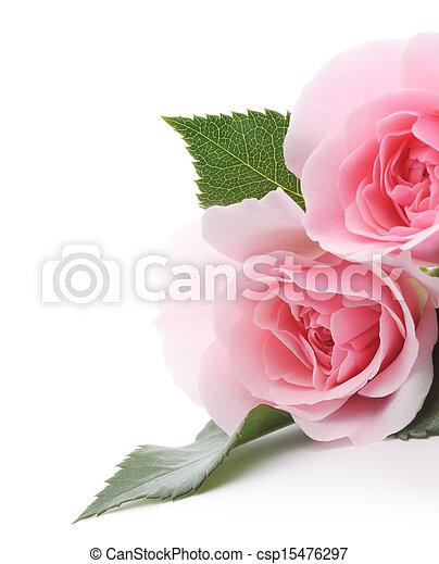 agancsrózsák, rózsaszínű - csp15476297