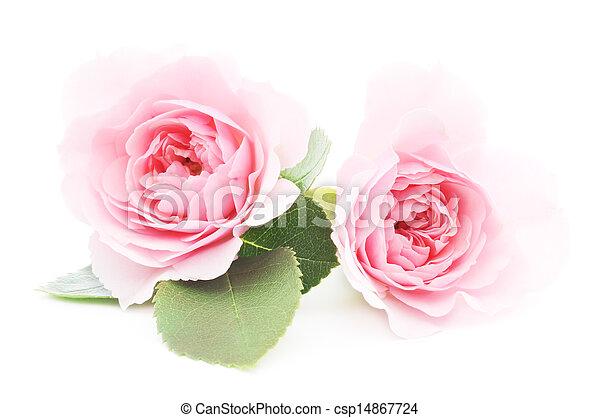 agancsrózsák, rózsaszínű - csp14867724