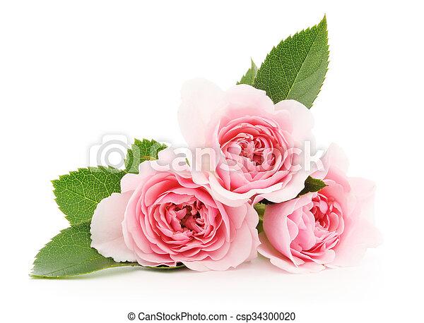 agancsrózsák, rózsaszínű - csp34300020