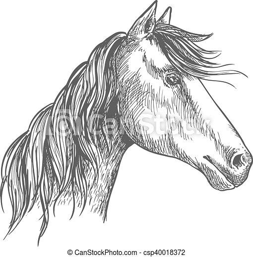 amerikai félvad ló, portré, ló, mane., csődör, skicc - csp40018372