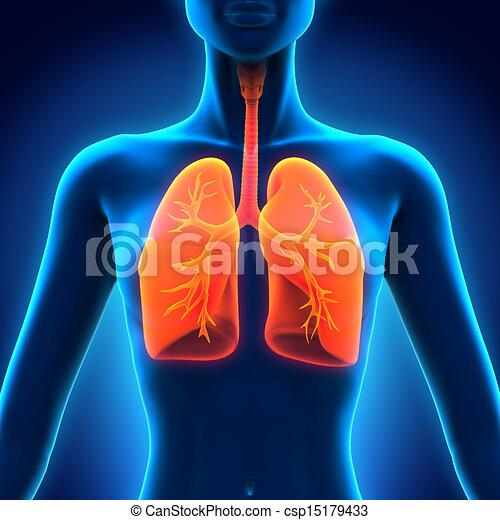 anatómia, légzőrendszer, emberi - csp15179433