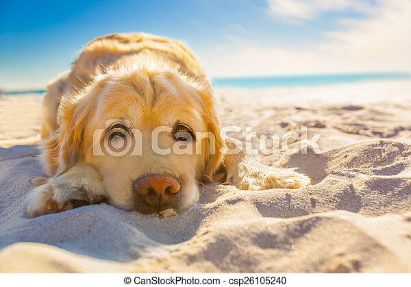 bágyasztó, kutya - csp26105240