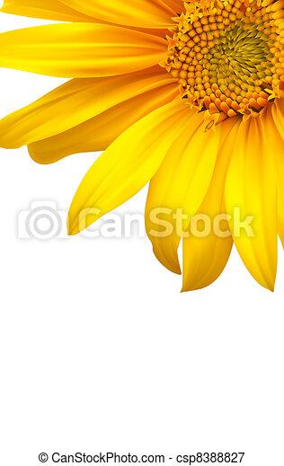 backgound., vektor, művészet, virág, napraforgó - csp8388827