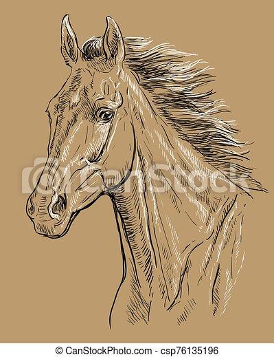 barna ló, 23, portré - csp76135196