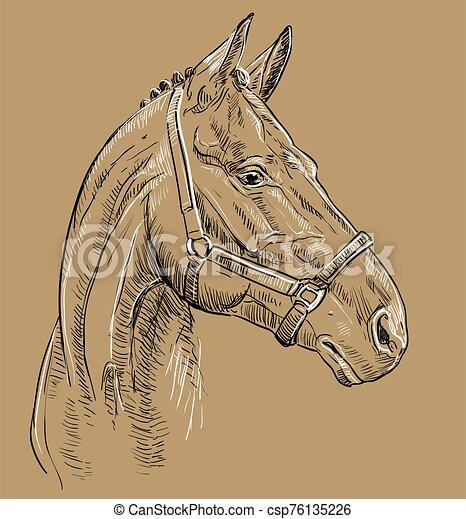 barna ló, 27, portré - csp76135226