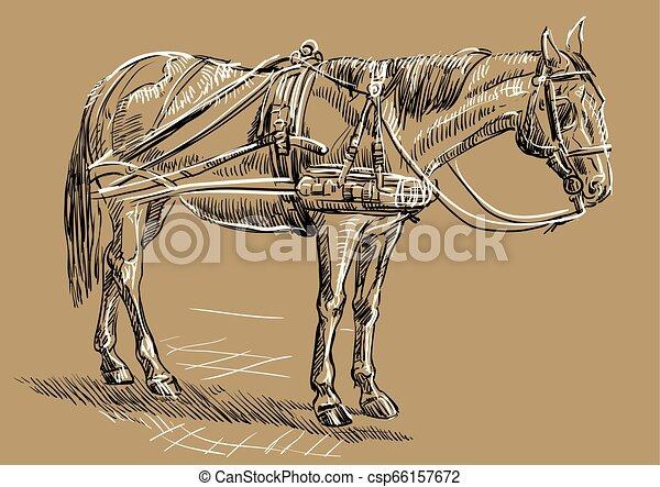 barna ló, hám - csp66157672