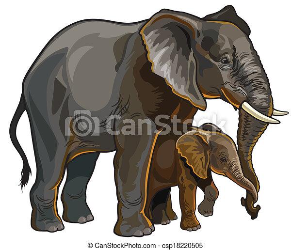 csecsemő elefánt, anya - csp18220505