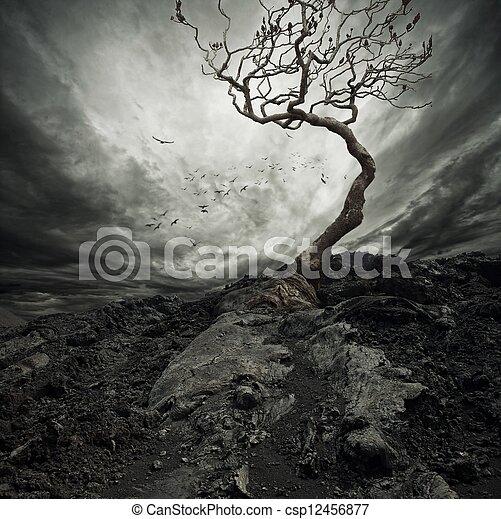 elhagyott, öreg, drámai ég, fa., felett - csp12456877