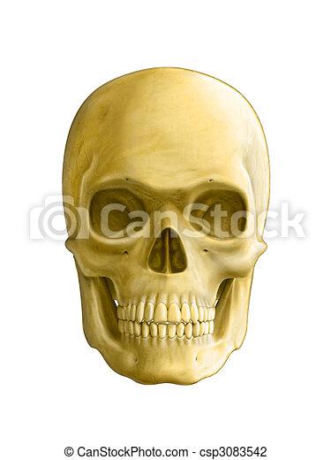 emberi koponya - csp3083542