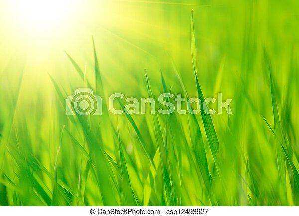 eredet, fényes, meleg, zöld, nap, friss, fű - csp12493927