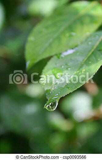 esőcsepp - csp0093566