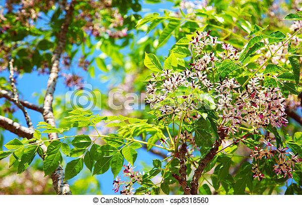 fa, virágzó - csp8318560