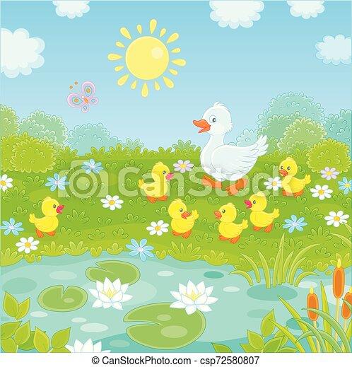 fehér, kiskacsák, sárga kacsa - csp72580807