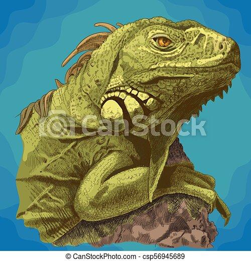fej, metszés, ábra, iguana - csp56945689
