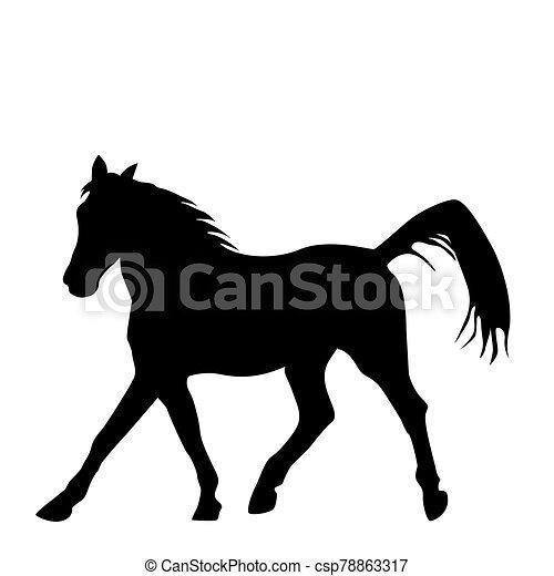 fekete, sillhouette, háttér, ló, elszigetelt, fehér - csp78863317