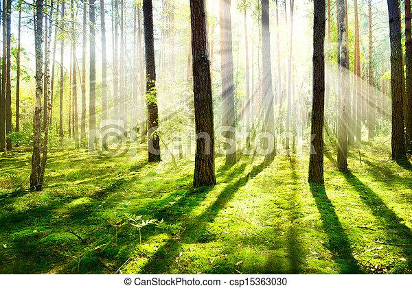 fog., ködös erdő, reggel, ködös - csp15363030