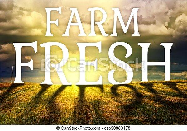 fogalom, major terep, friss, mezőgazdaság, táj - csp30883178
