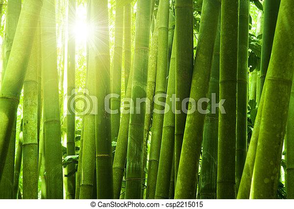 forest., bambusz - csp2215015