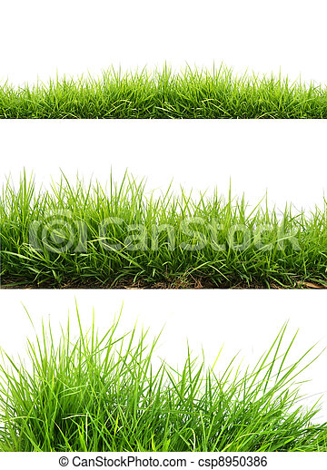 friss, fű, zöld, eredet - csp8950386