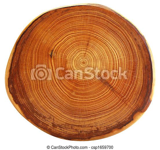 gyönyörű, elvág, fa - csp1659700