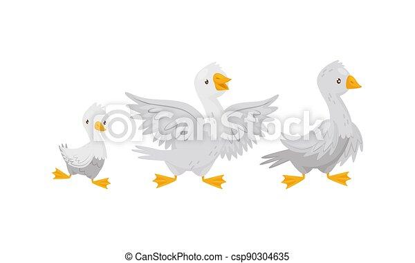 horgolt, csecsemő madár, tanya, gyalogló, állhatatos, udvar, barka, vektor, liba - csp90304635