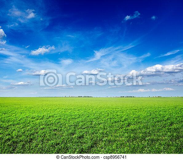 kék ég, mező, zöld, alatt, friss, fű - csp8956741