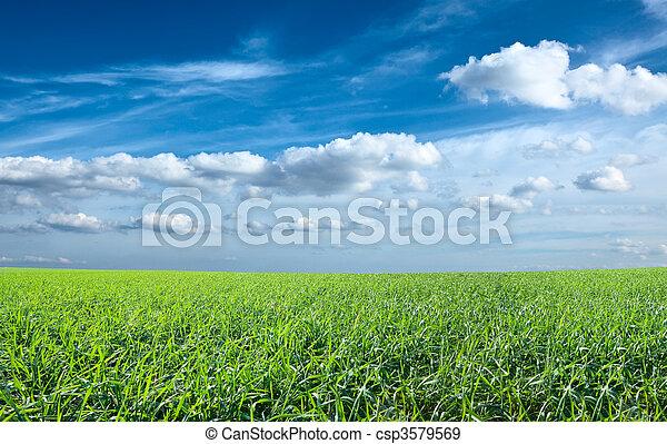 kék ég, mező, zöld, alatt, friss, fű - csp3579569