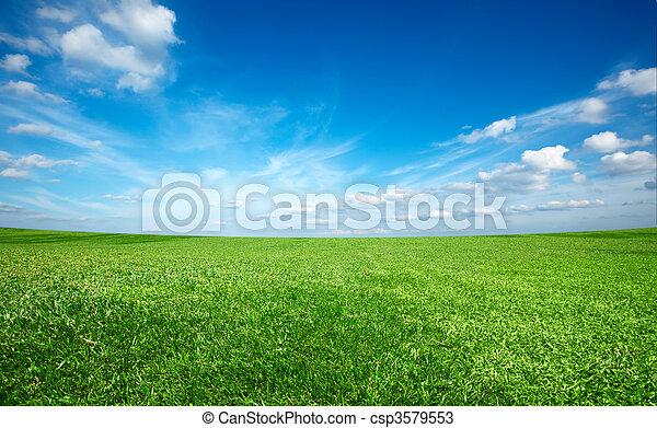 kék ég, mező, zöld, alatt, friss, fű - csp3579553