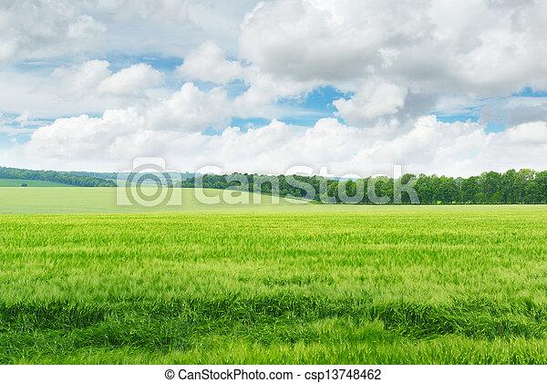 kék, mező, ég, zöld - csp13748462