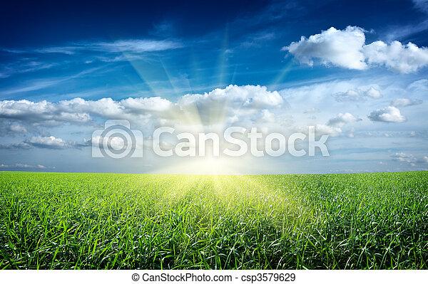 kék, nap, ég, zöld terep, napnyugta, alatt, friss, fű - csp3579629