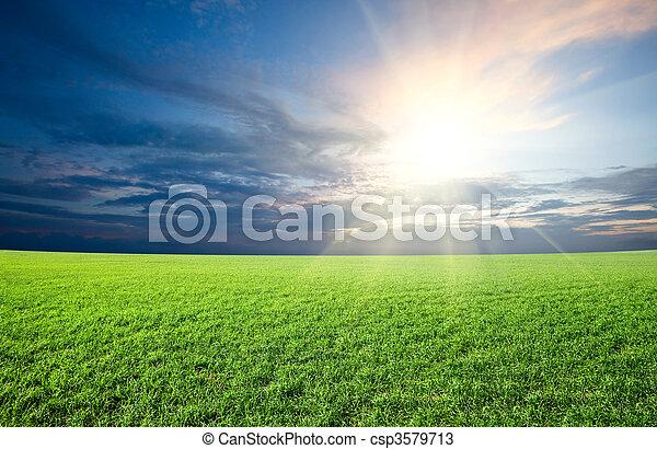 kék, nap, ég, zöld terep, napnyugta, alatt, friss, fű - csp3579713