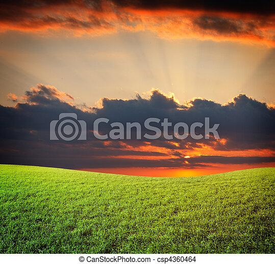 kék, nap, ég, zöld terep, napnyugta, alatt, friss, fű - csp4360464