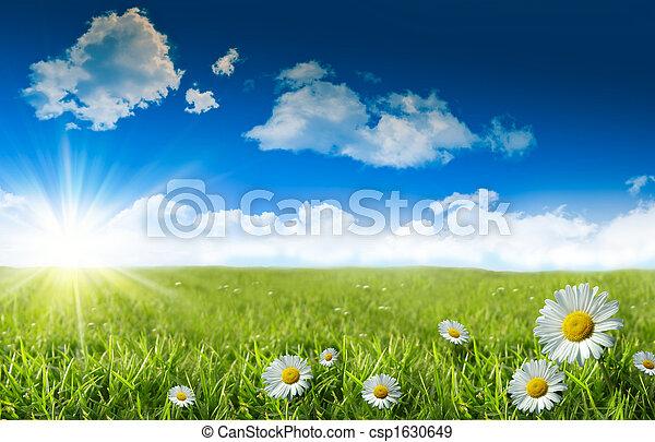 kék, vad fű, ég, óriási sajtkorongok - csp1630649