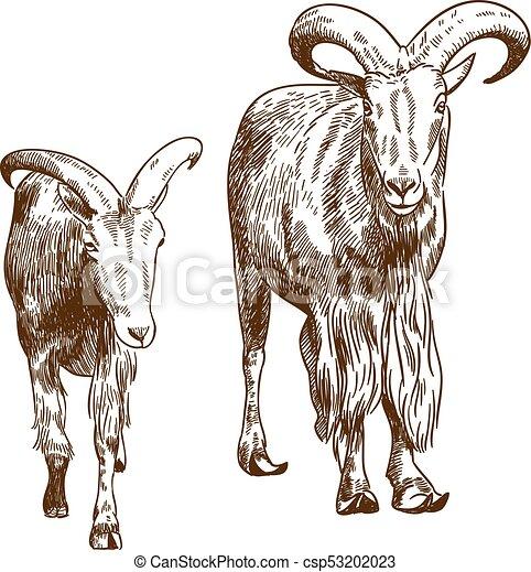 kecske, rajz, két, metszés, ábra, hegy - csp53202023