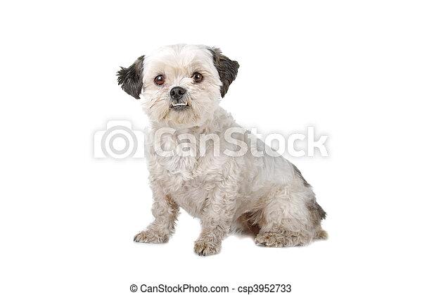 kutya, nagy hím kenguru, ülés - csp3952733