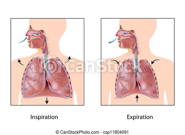 lélegzés, eps10, biciklizik - csp11804091
