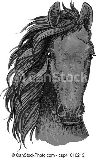 ló, csődör, fej, szürke, arab, skicc - csp41016213