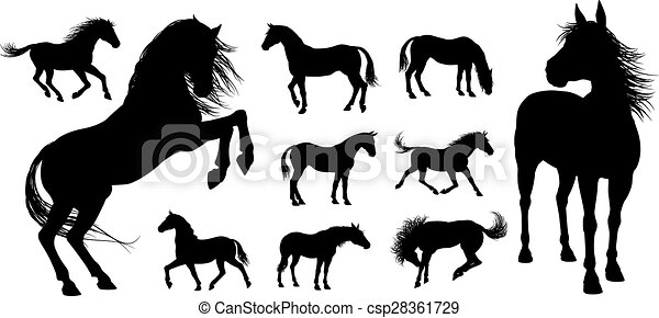 ló, körvonal - csp28361729