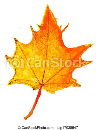 levél növényen, -, sárga, gyerekek, ősz, rajz, juharfa - csp17038947