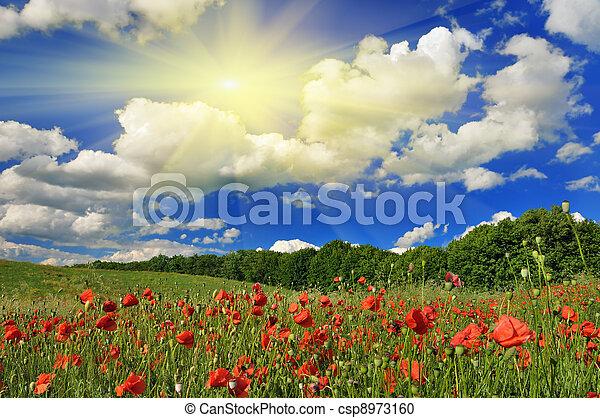 mák, eredet, napos nap, field. - csp8973160