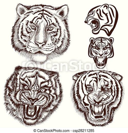 mód, állhatatos, bevésett, tigris, kéz, húzott - csp28211285